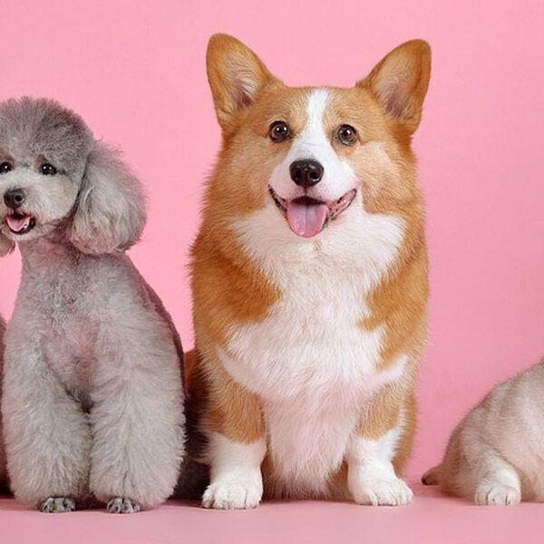 Acc. Mascotas